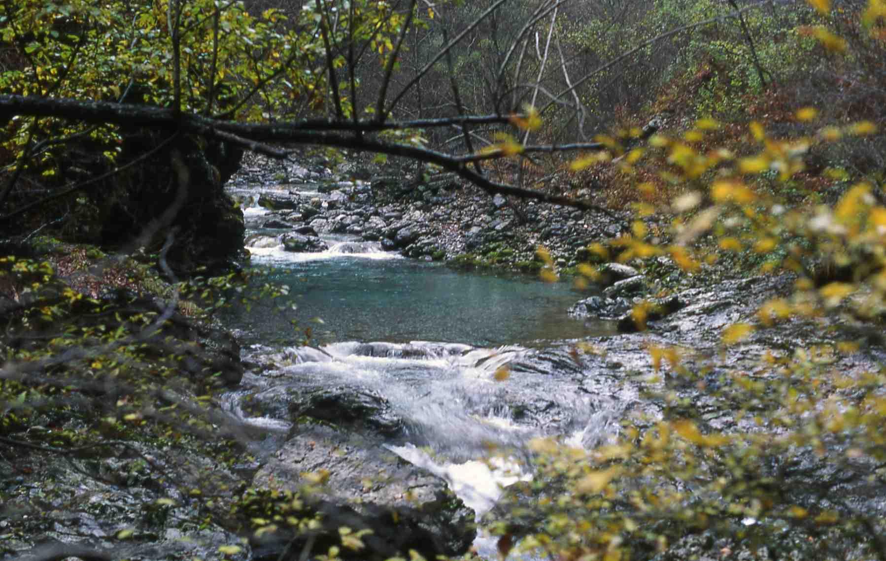 zadlascica-slovenia-november-1993-a-j-crivelli